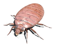 Bed Bug Control Catford SE6, Bed Bug Pest Catford SE6, Bed Bug Removal Catford SE6