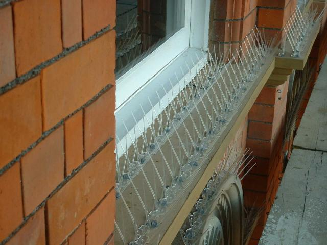 Bird Spikes Catford, Bird Pest Control Catford